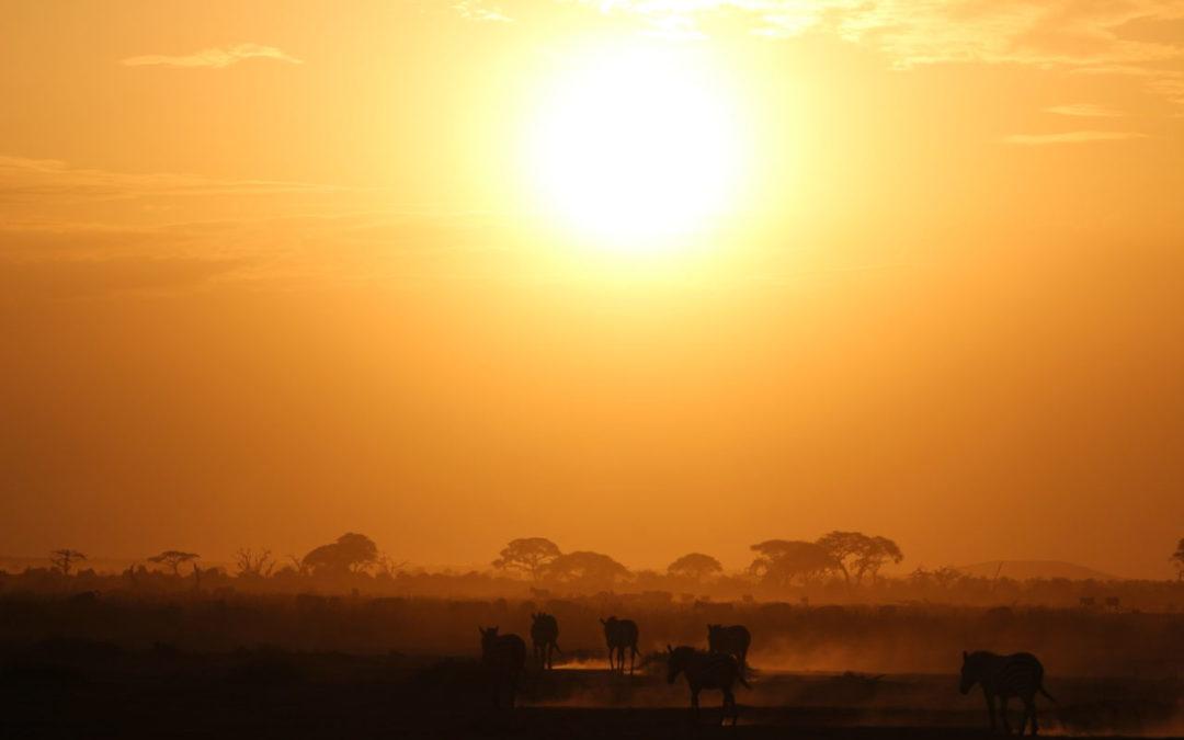 Safari i Tanzania – en opplevelse for alle sanser!