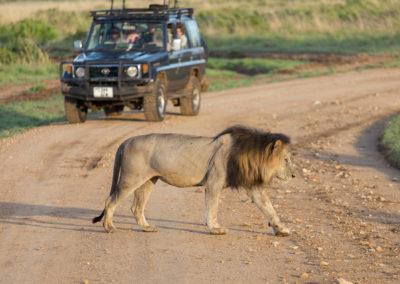 "<a href=""http://www.pearljourneys.com/safari-i-tanzania/"" target=""_blank""</br>Safari</a>"