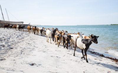 En dag på Bomani – i Mlingotini